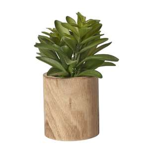 Living Space Laurel In Wood Pot