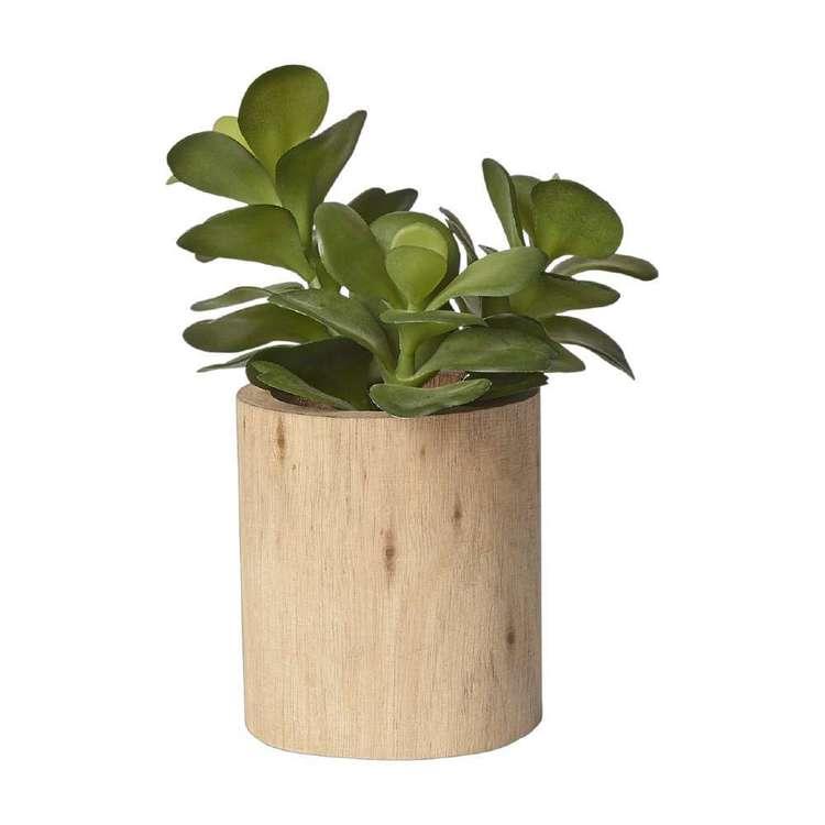Living Space Jade Succulent In Wooden Pot