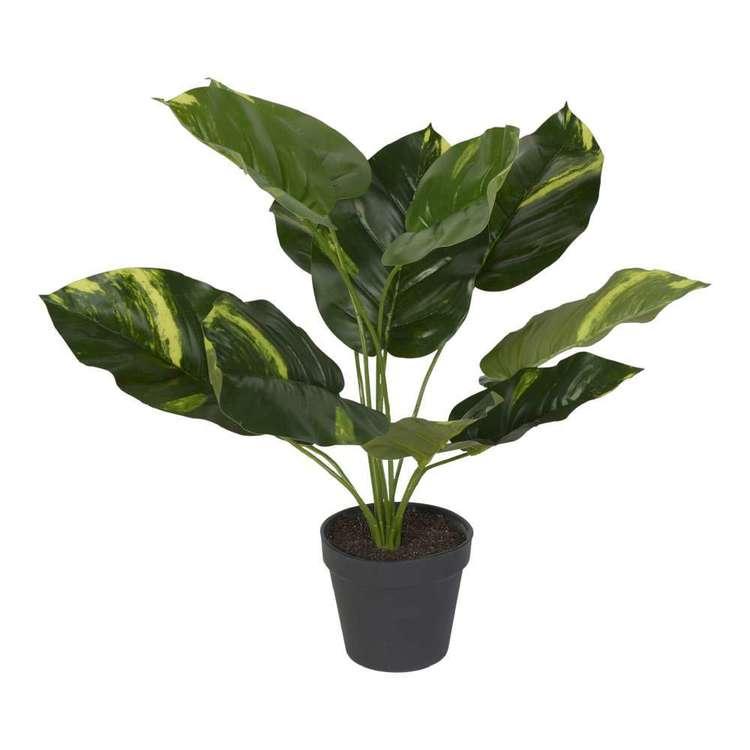 Botanica 45 cm Dieffenbachia Plant