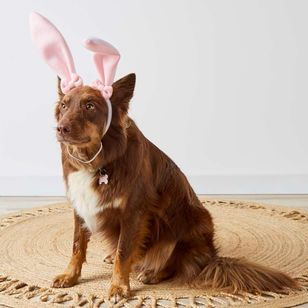 Happy Easter Bunny Pet Headband