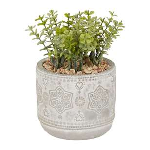 Ombre Home Boho Bloom Succulent In Pot