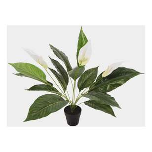 Botanica Artificial Peace Lily Plant