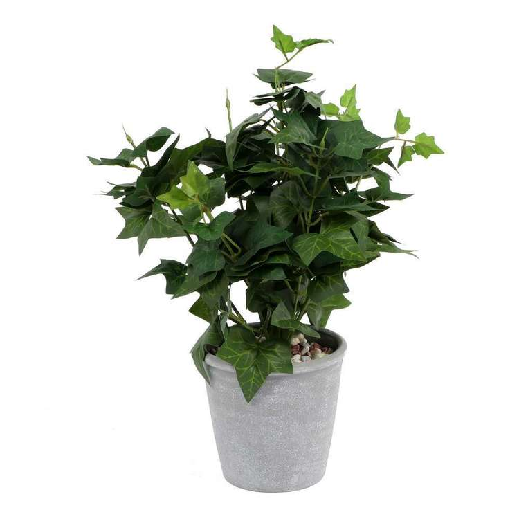 Botanica Ivy Green Plant
