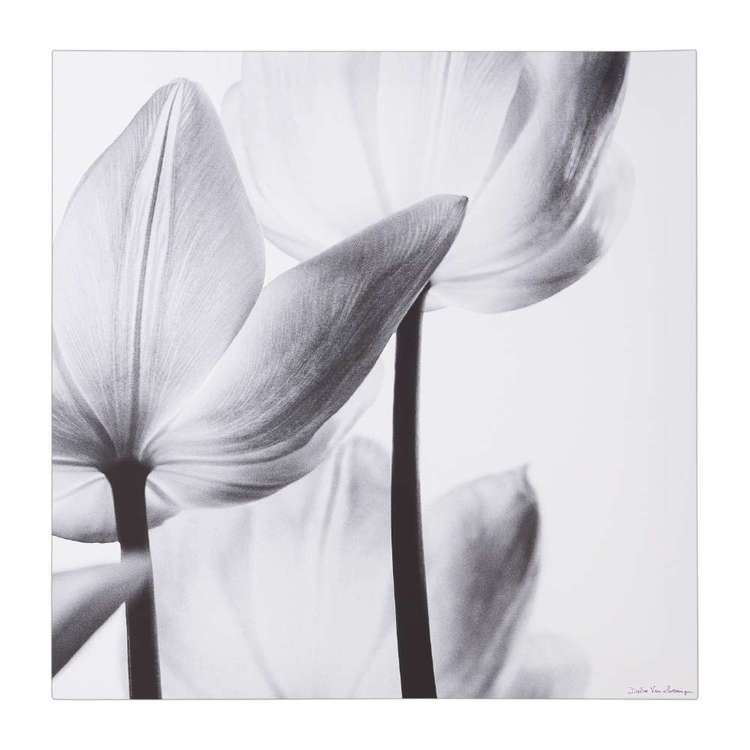 Impact Posters Translucent Tulips III Framed Canvas