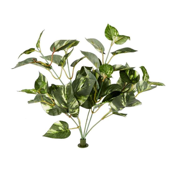 Garden Wall Gallery Buckle Plant Pothos Bush