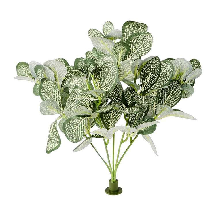 Garden Wall Gallery Buckle Plant Peperomia Bush Green White Large