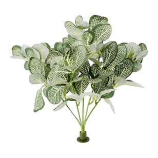 Garden Wall Gallery Buckle Plant Peperomia Bush