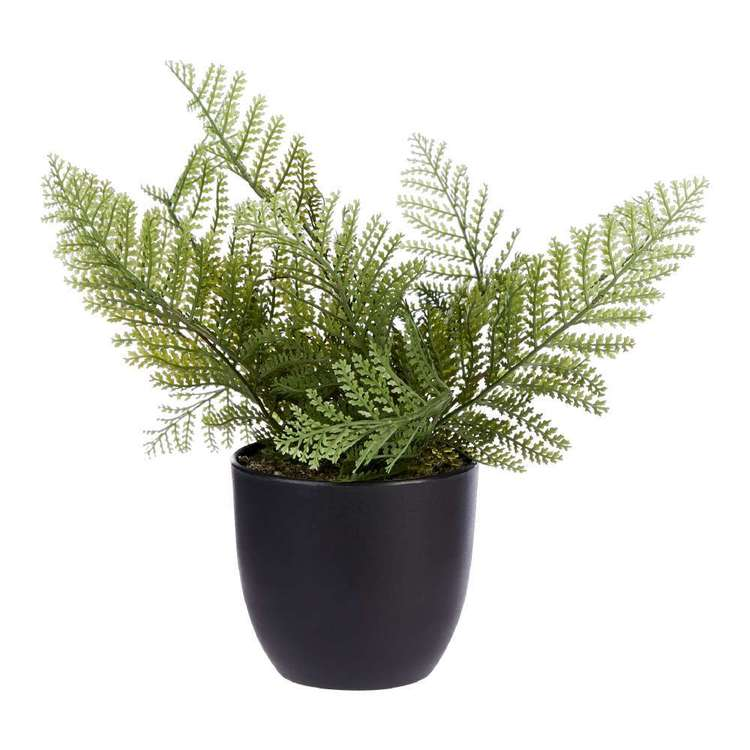 Living Space Fern In Pot