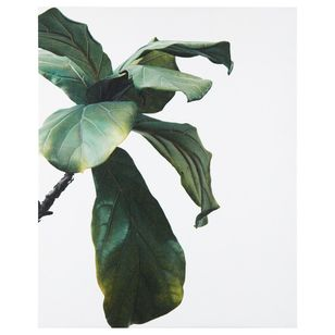 Bouclair Essence Of Green Banana Plant Leaf Print