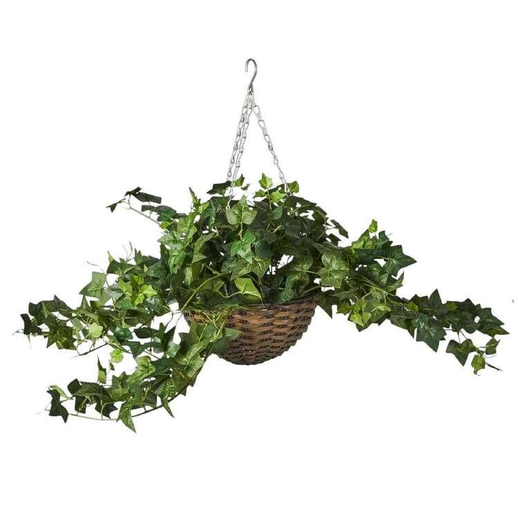Botanica Tuscan Sun Hanging Ivy In Wicker Basket