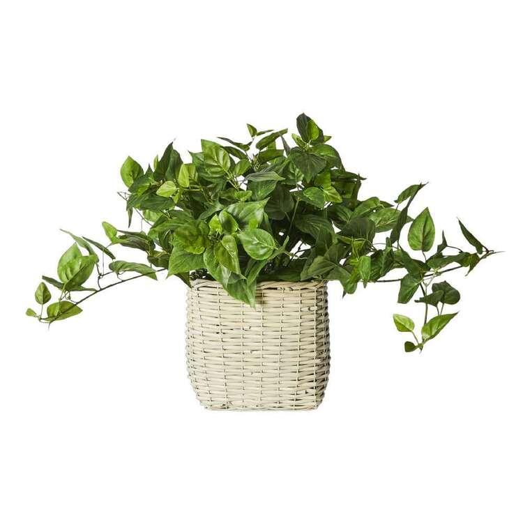 Botanica Tuscan Sun Ivy In Wicker Basket