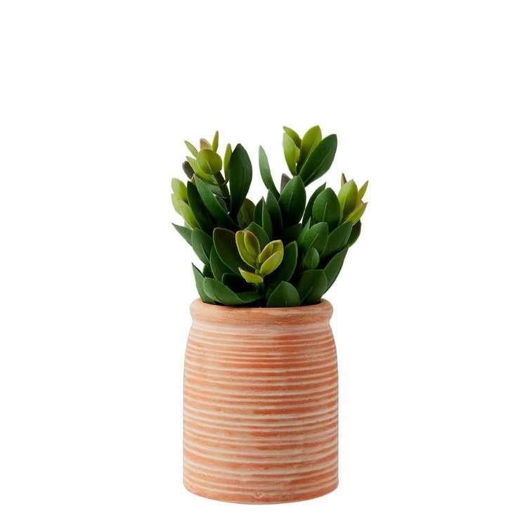 Living Space Urban Sanctuary Succulent In Small Terracotta Pot