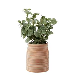 Living Space Urban Sanctuary Eucalyptus In Small Terracotta Pot