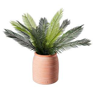 Living Space Urban Sanctuary Sago Cycas In Large Terracotta Pot