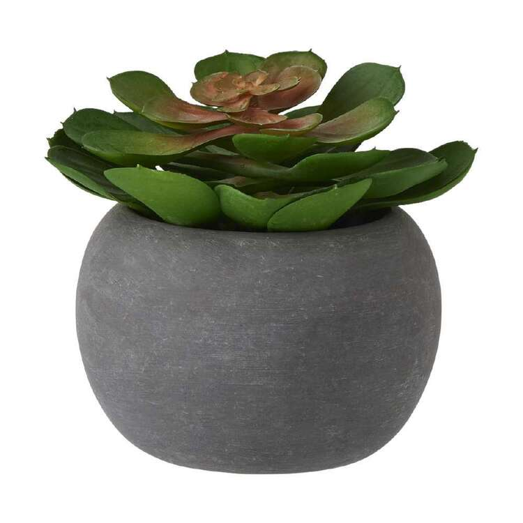 Living Space Mini Lotus Potted Plant