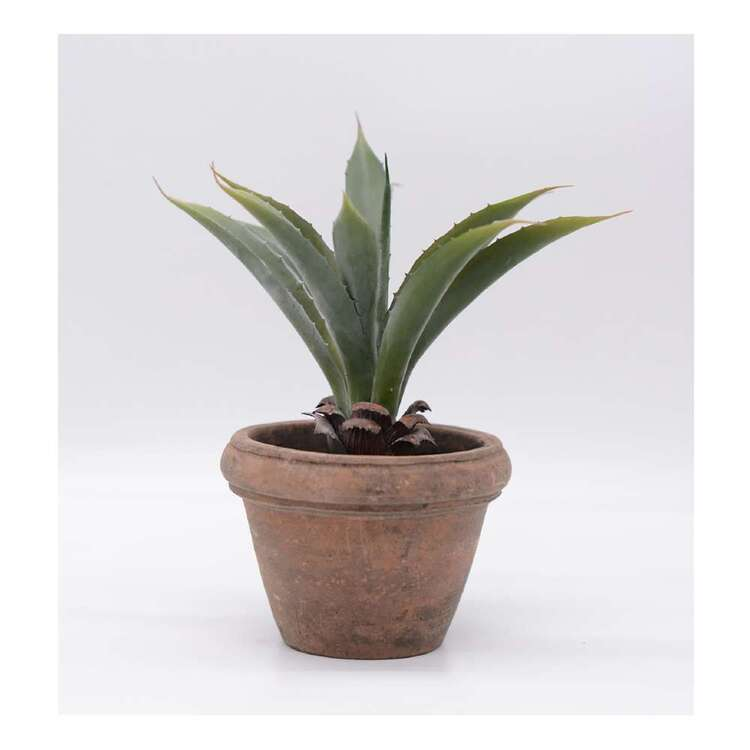 Living Space Aloe In Cement Pot