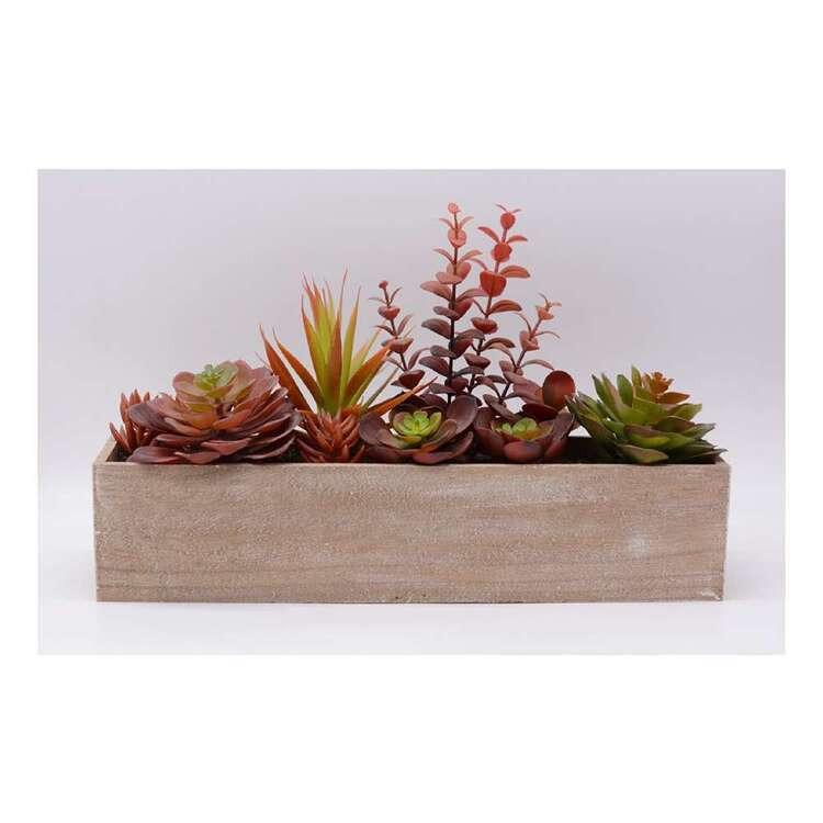 Living Space 46 cm Mixed Succulent In Wooden Box #2