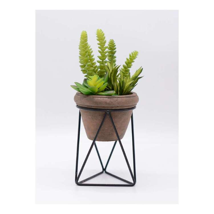 Living Space Mixed Succulent W/Stand