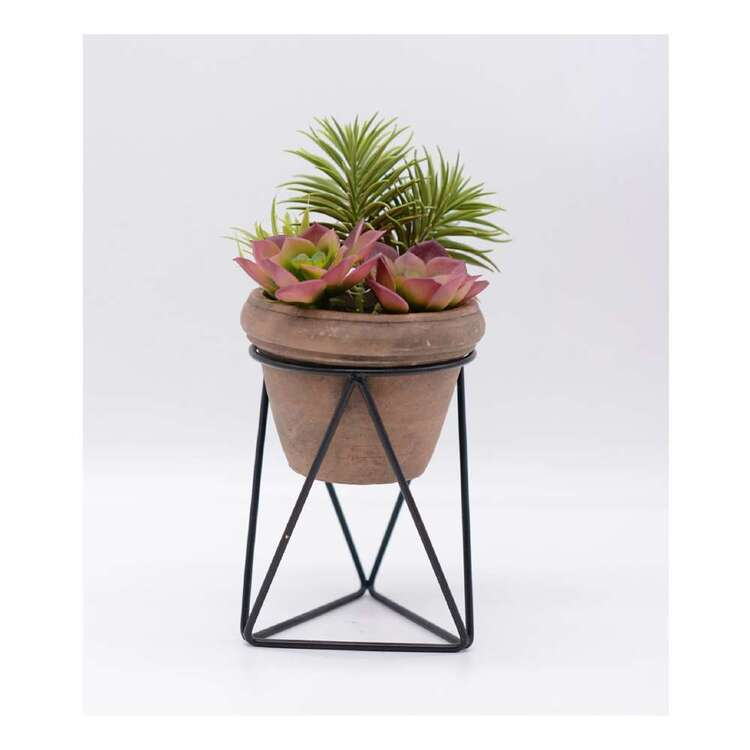 Living Space 16 x 28 cm Mixed Succulent In Pot With Stand