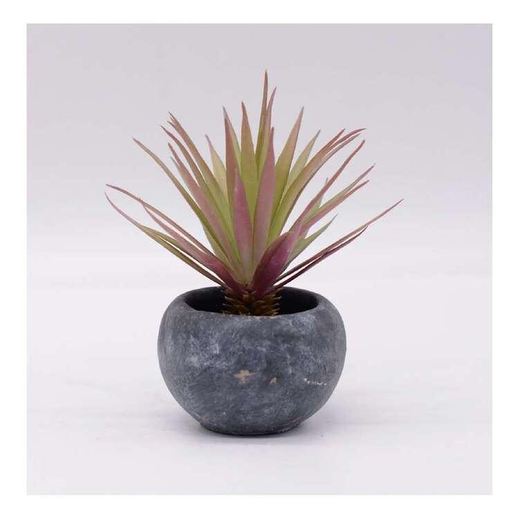 Living Space 14 x 17 cm Sword Grass In Pot