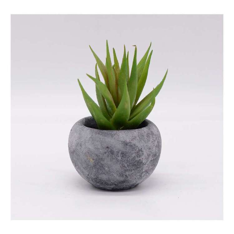 Living Space 11 x 15 cm Aloe In In Cement Pot