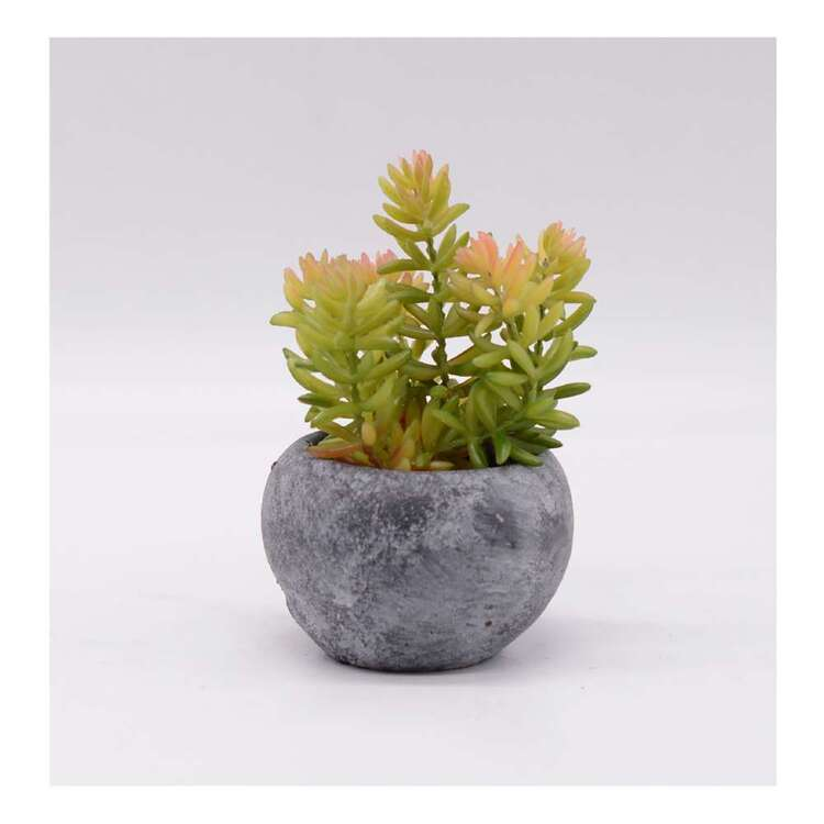 Living Space Succulent Sedum In Pot