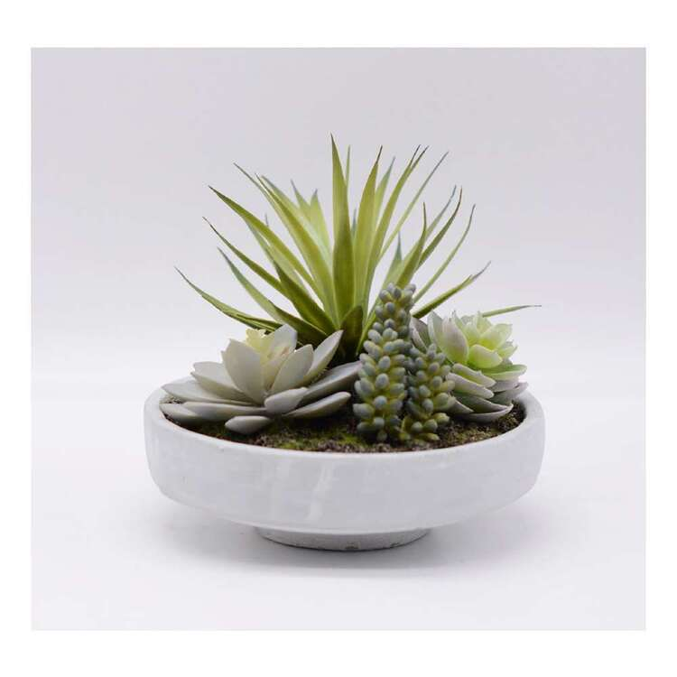 Living Space 23 x 20 cm Mixed Succulent In Pot