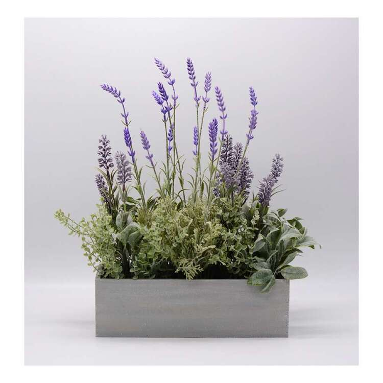 Living Space Lavender In Wood Box