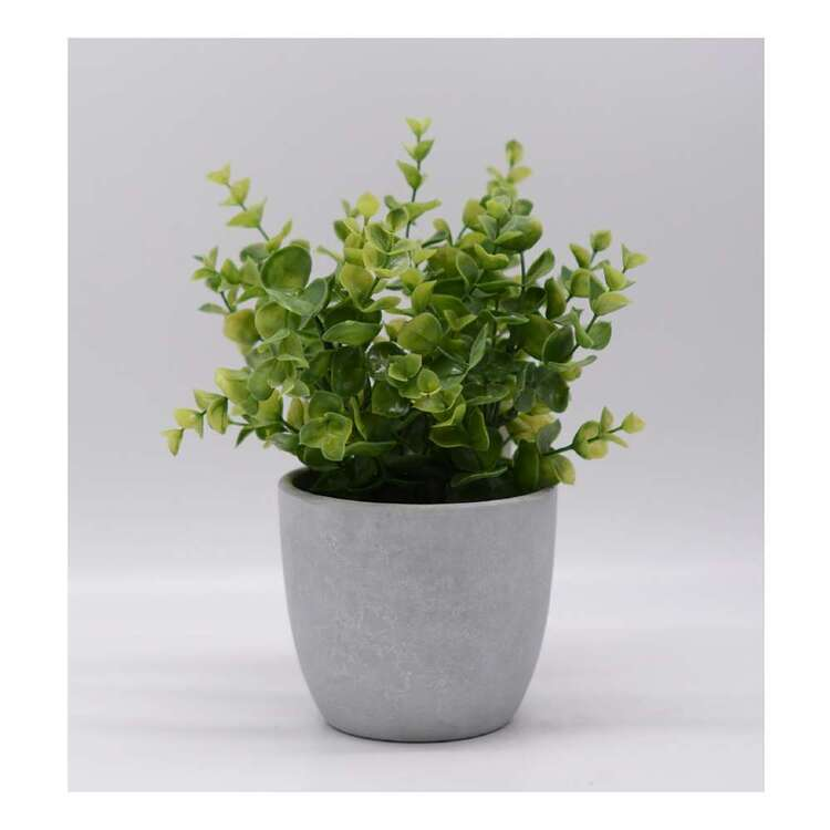 Living Space Greenery In Cement Pot 2