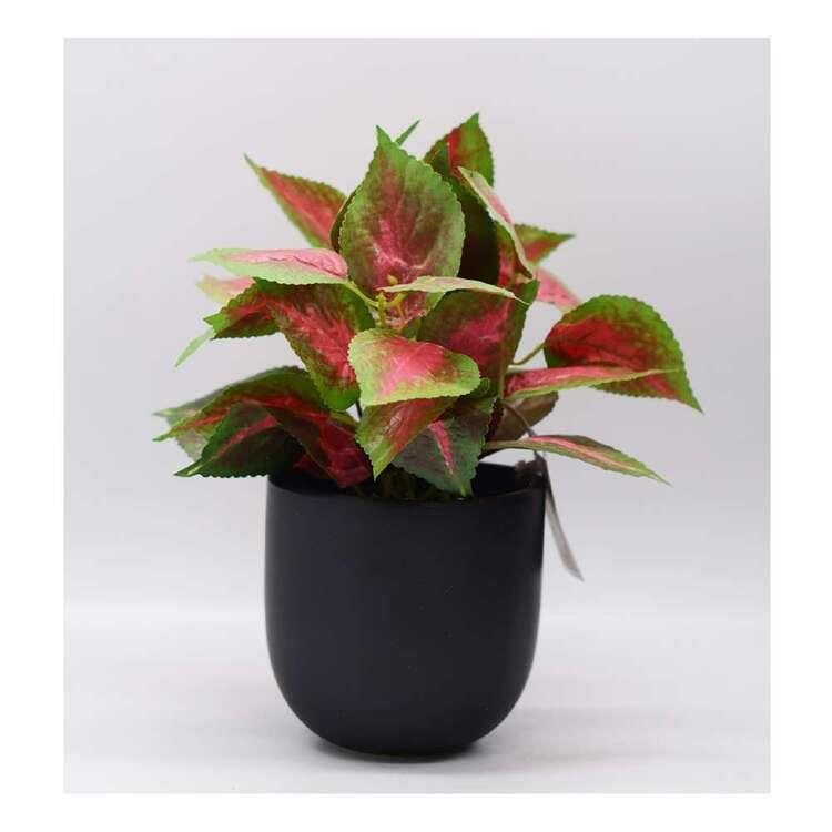 Living Space 23 x 27 cm Ivy In In Ceramic Pot