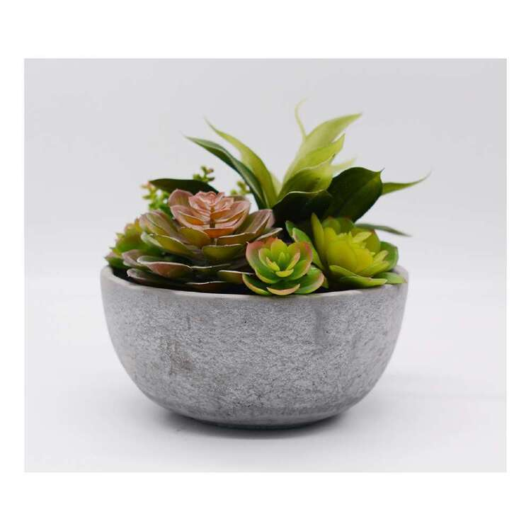 Living Space 25 x 22 cm Mixed Succulent In Pot Green 25 x 22 cm