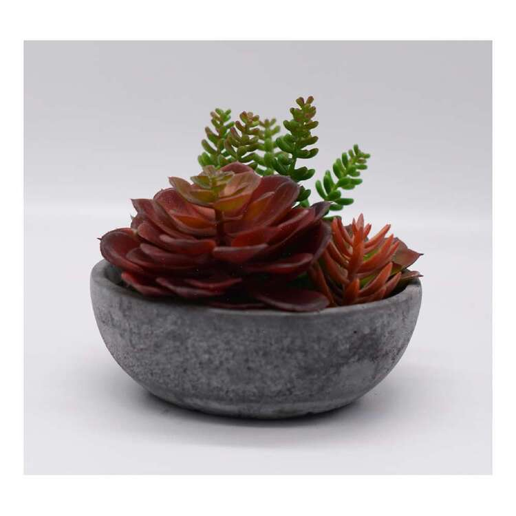 Living Space Mixed Succulent In Pot