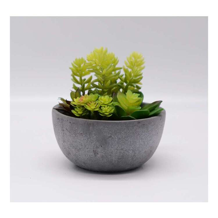 Living Space 15 cm Mixed Succulent In Pot