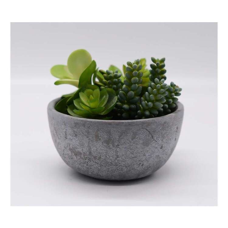 Living Space 17 x 13 cm Mixed Succulent In Pot