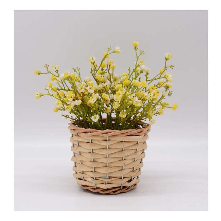 Living Space Baby Breath In Rattan Basket