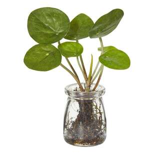 Rogue Money Plant In Jar Potted Plant