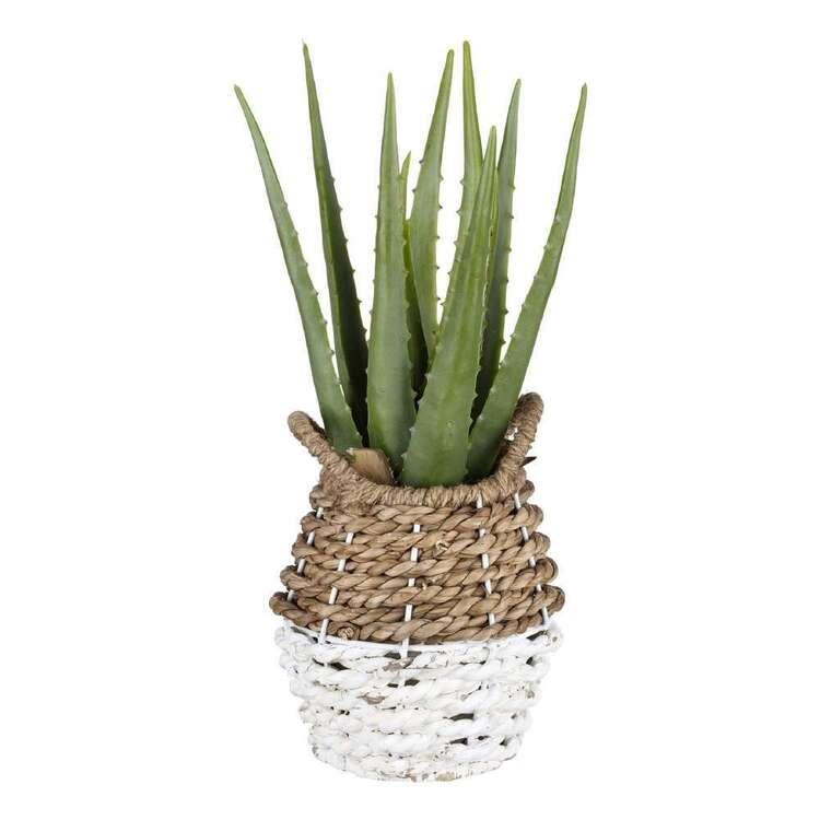 Bouclair Costa Aloe In Rattan Basket