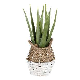 Bouclair Costa Aloe In Rattan Basket