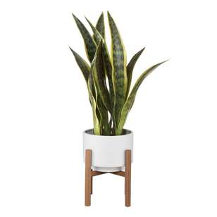 Bouclair Costa Sansevieria Planter