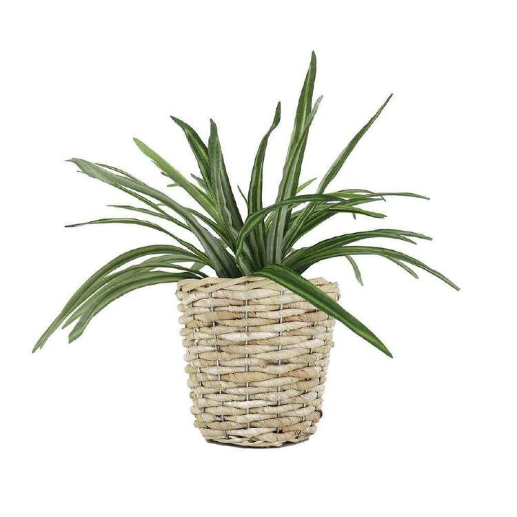 Ombre Home Urban Jungle Plant In Basket