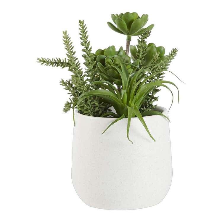 Living Space Multi Succulent In Speck Pot