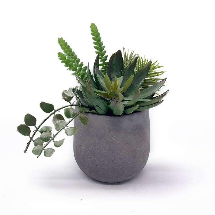 Living Space Succulent In Cement Pot