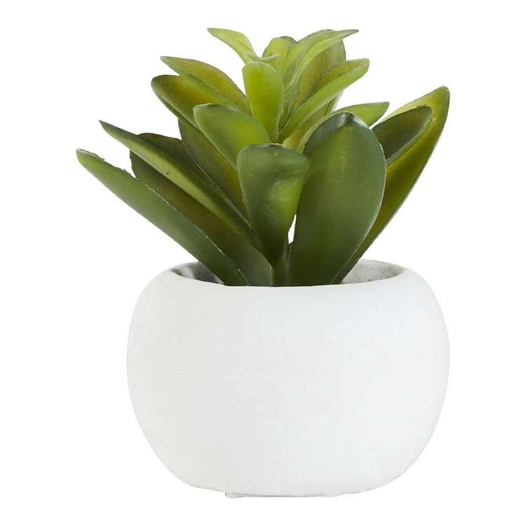 Living Space Succulent In White Pot #1