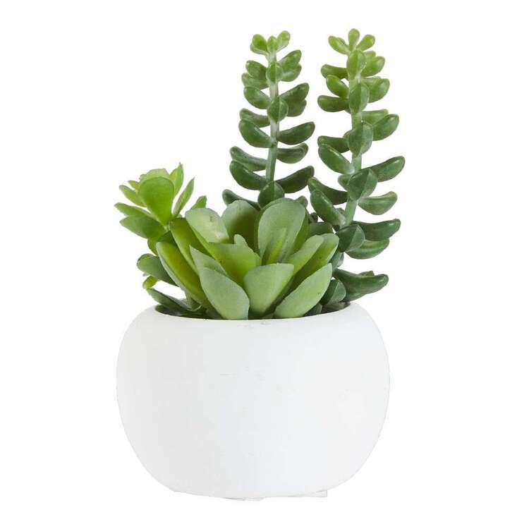 Living Space Succulent In White Pot #2