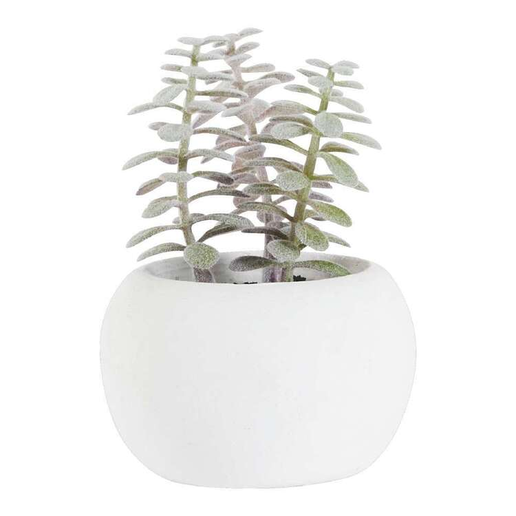 Living Space Succulent In White Pot #3