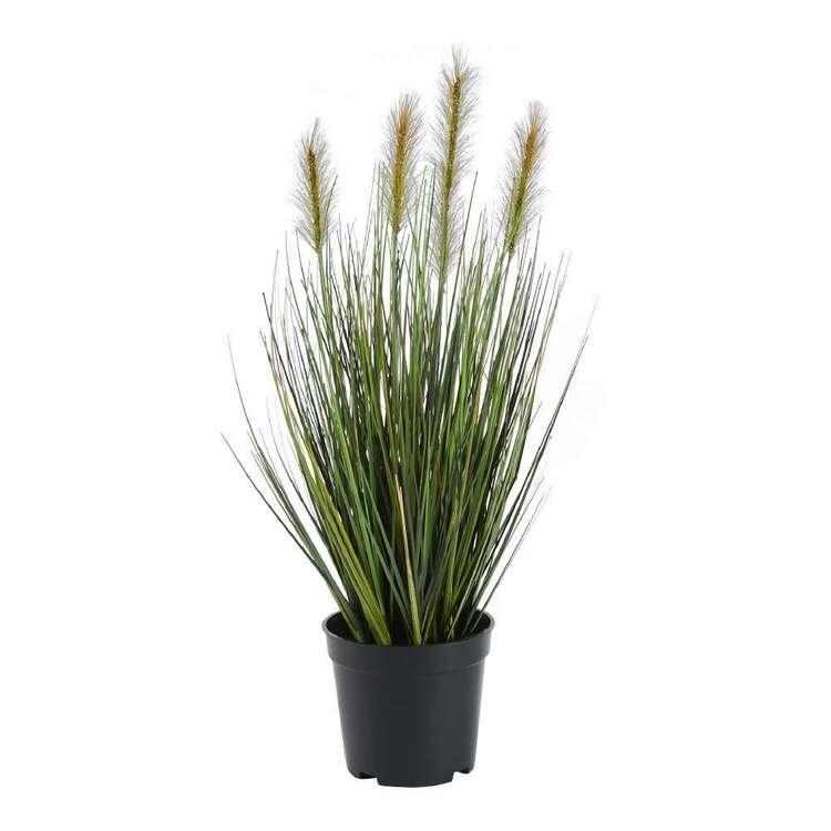 Botanica Onion Grass In Pot