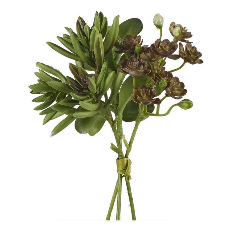Succulent Bundle