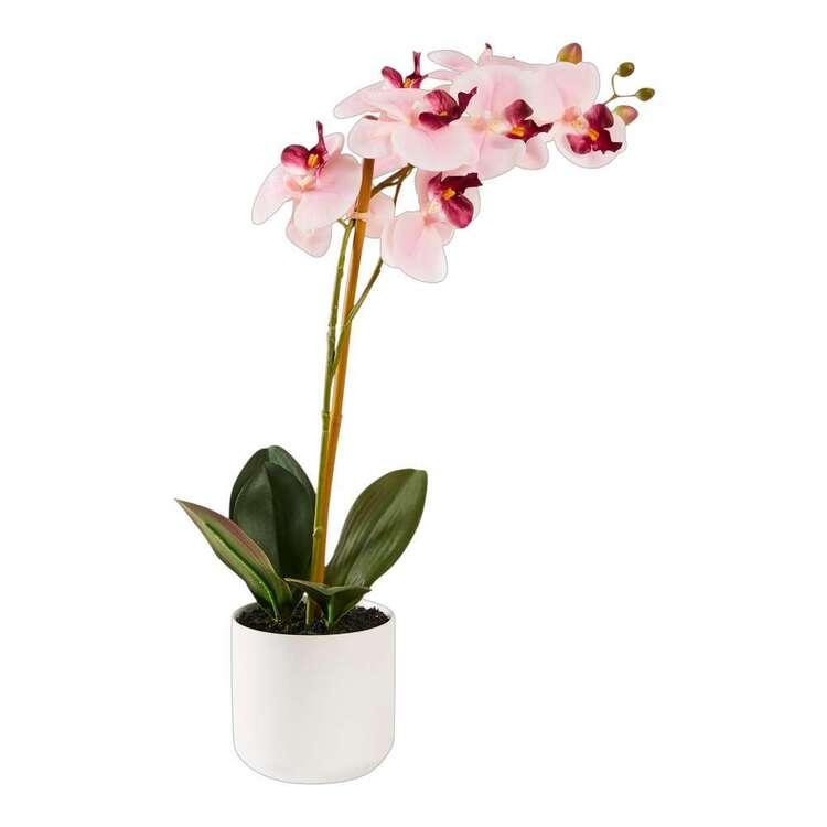 Botanica 2 Stem Potted Orchid