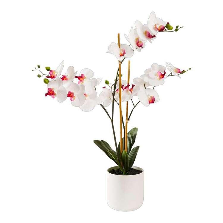 Botanica 3 Stem Potted Orchid