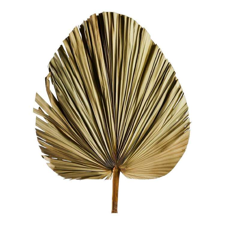 80 cm Dried Natural Fan Palm